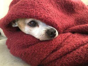 paw-pad-dog-blanket-2