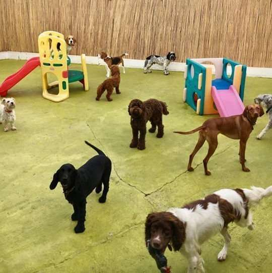 The Paw Pad Daycare Centre