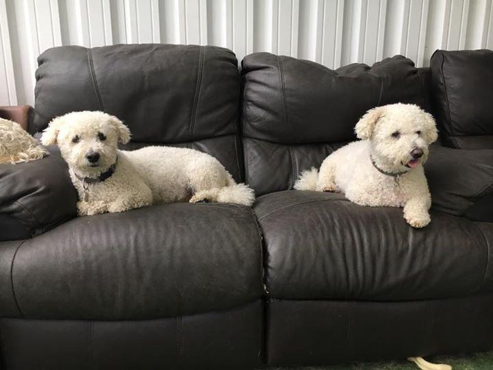 Comfortable Sofa at The Paw Pad